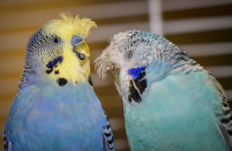 Κούρνιασαν πια οι… «παπαγάλοι» στα κλουβιά τους!