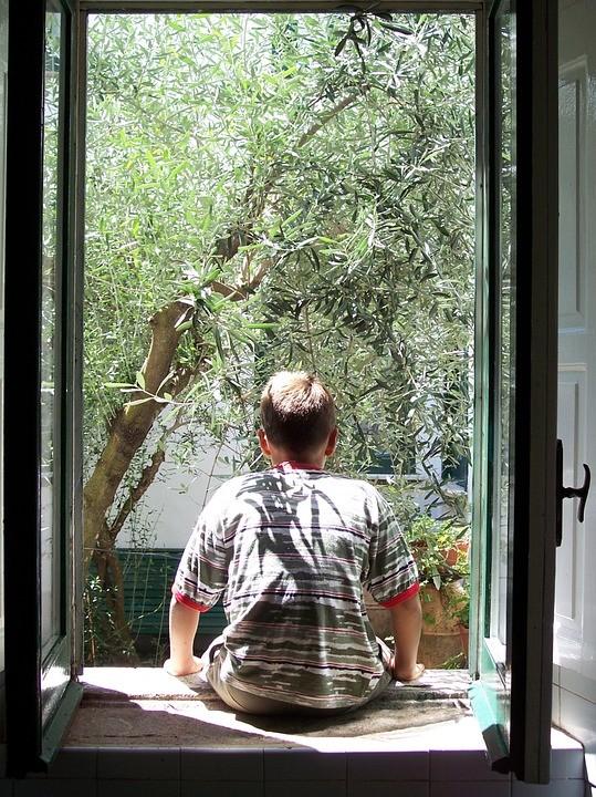 Δωρεάν ελαιόδεντρα για φύτευση δίνει στους δημότες του ο Δήμος Φυλής!