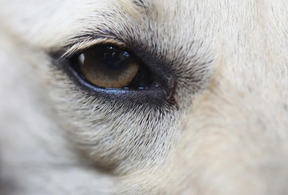Το μήνυμα του Δημάρχου Φυλής για την Παγκόσμια Ημέρα των Αδέσποτων Ζώων